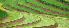 Voyager avec l'agence de voyage Travelogy Vietnam