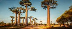Les joyaux naturels incontournables à Madagascar