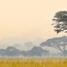 Pour un voyage responsable en Tanzanie