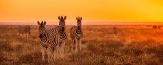 Visiter le parc National d'Etosha