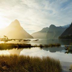 Quand partir en Nouvelle-Zélande ?