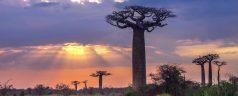 Comment assurer les préparations d'un voyage à Madagascar?