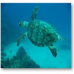 À la découverte des espaces marins du Parc National du Guadeloupe