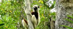 MADAGASCAR EN TABLEAU – VOYAGES SUR MESURE