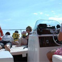 Une balade en mer pour voir les Calanques à Marseille
