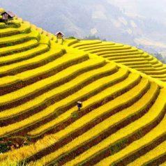 Tout ce qu'il faut savoir sur le Vietnam