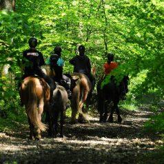 Le Centre Equestre de la Lys