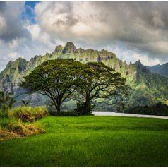 Hawaï : Une destination riche en découvertes