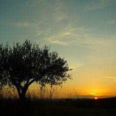 Développer son blog voyage