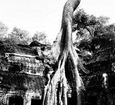La meilleure saison à Angkor, Cambodge, c'est parti!!