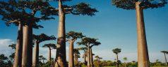 Madagascar : le trésor de l'océan Indien