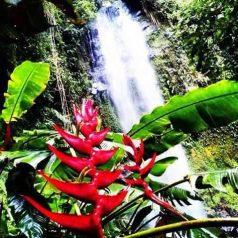 Une randonnée dans les montagnes panaméennes