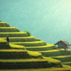 Voyage à Bali : à l'assaut de ses magnifiques rizières en terrasses