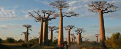 Préparer son voyage à Madagascar en 4 étapes