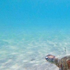 Séjour à la barrière de corail de l'Ouest australien